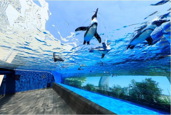 13.Sunshine Aquarium