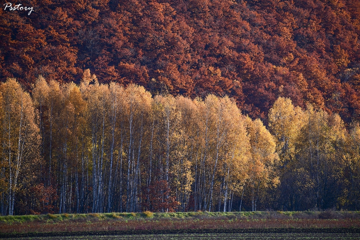 Hokkaido Day 2 (4)