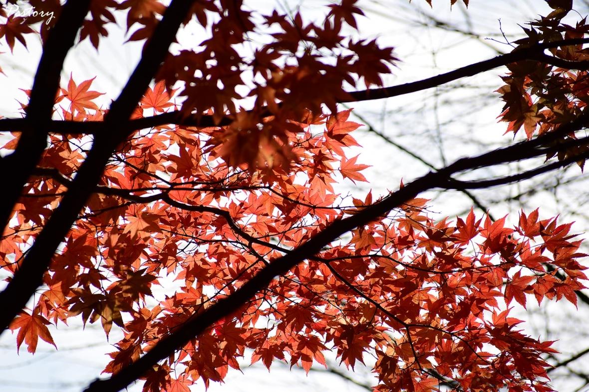 Hokkaido Day 5 (44)