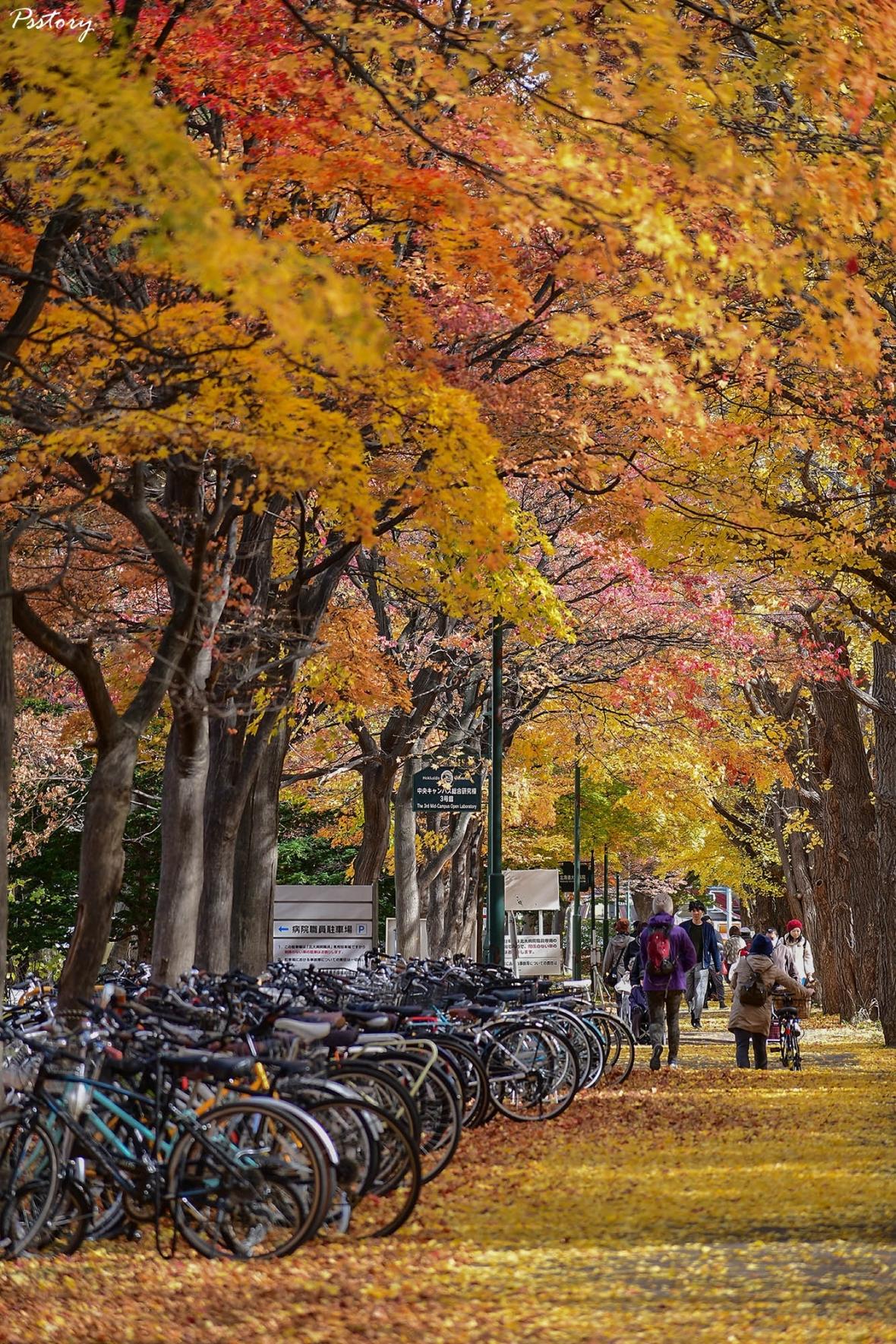 Hokkaido Day 6 (42)