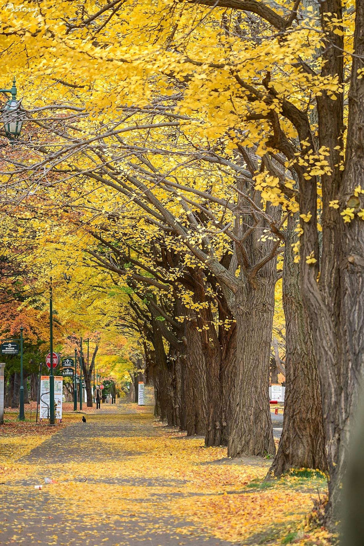 Hokkaido Day 7 (2)