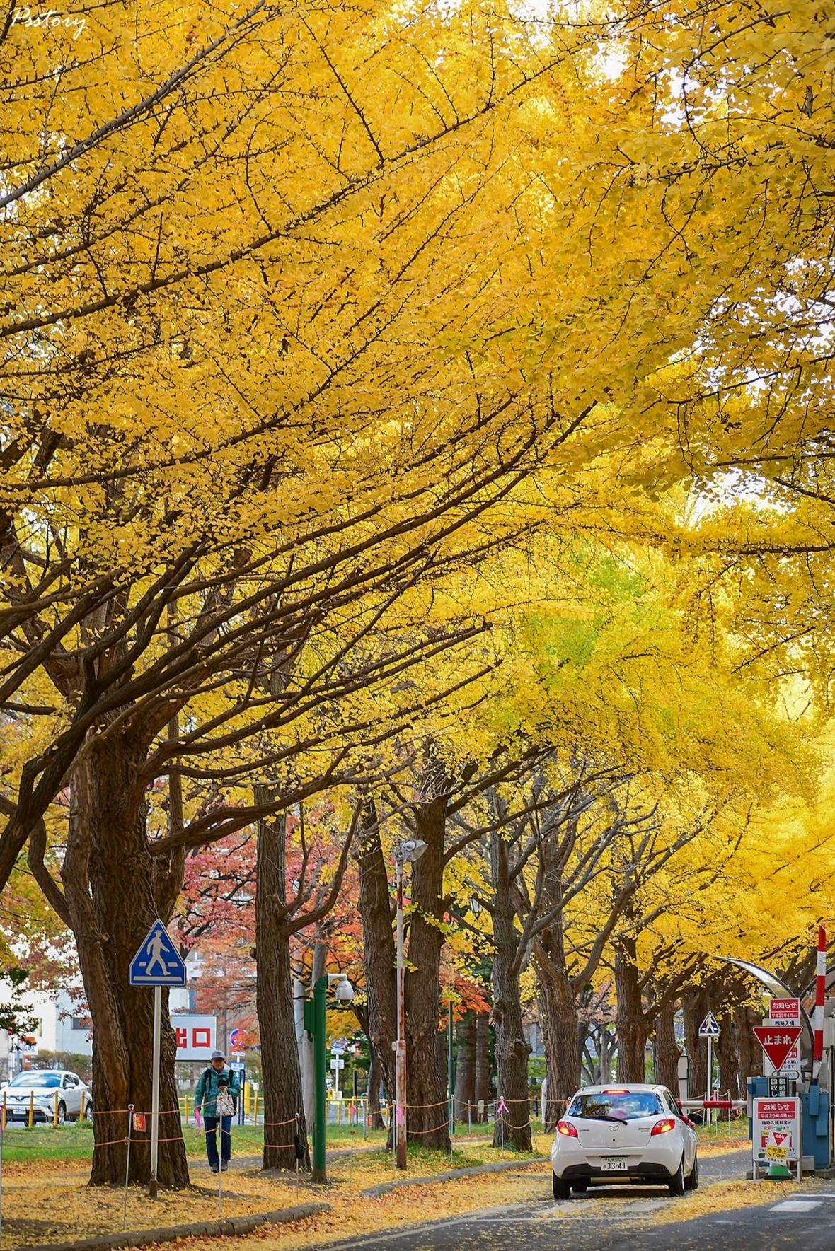 Hokkaido Day 7 (5)