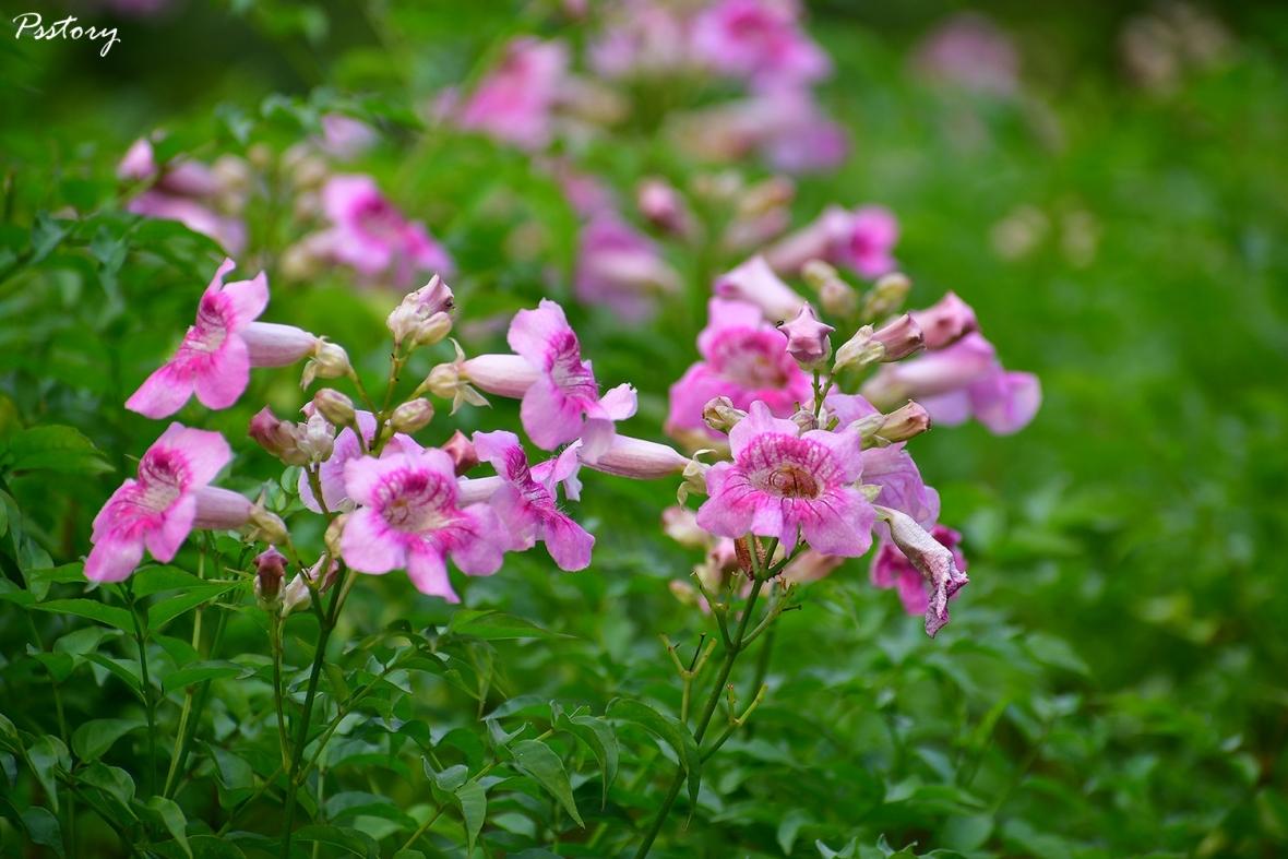 Flora Creek Chiang Mai (123)