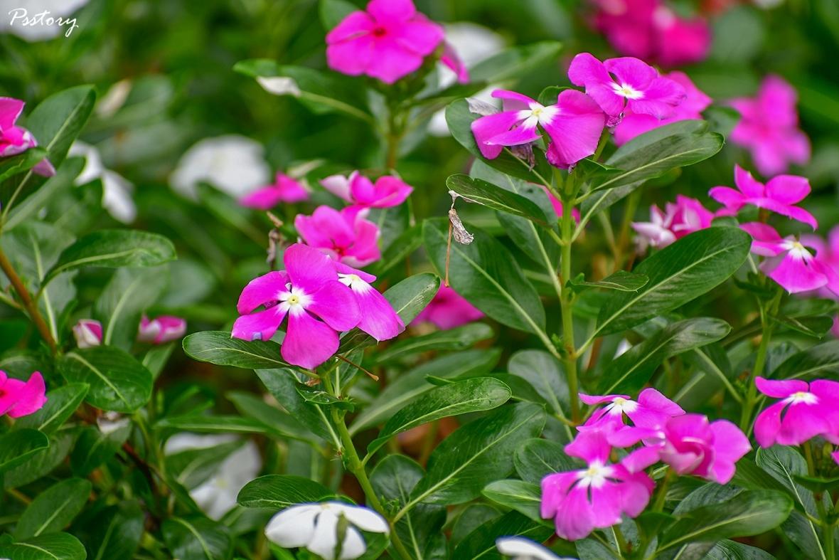 Flora Creek Chiang Mai (127)